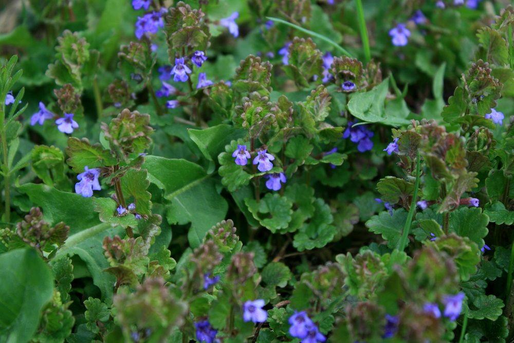 Naturalnieniebanalnie Naturalnie O Zdrowiu Herbs Plants Food