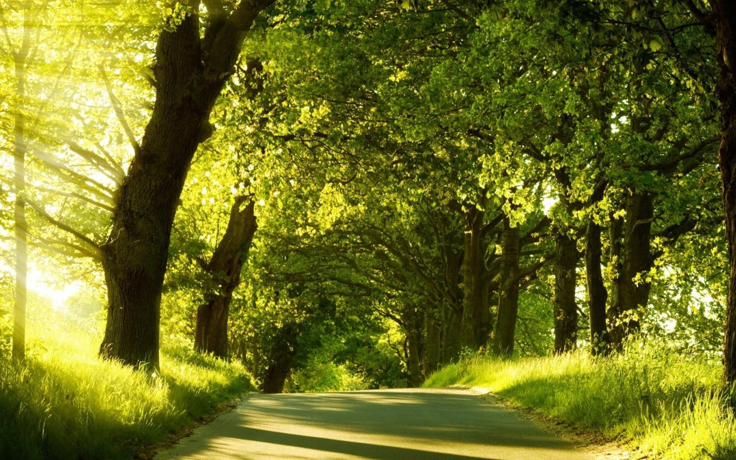 Natural Scenery 32