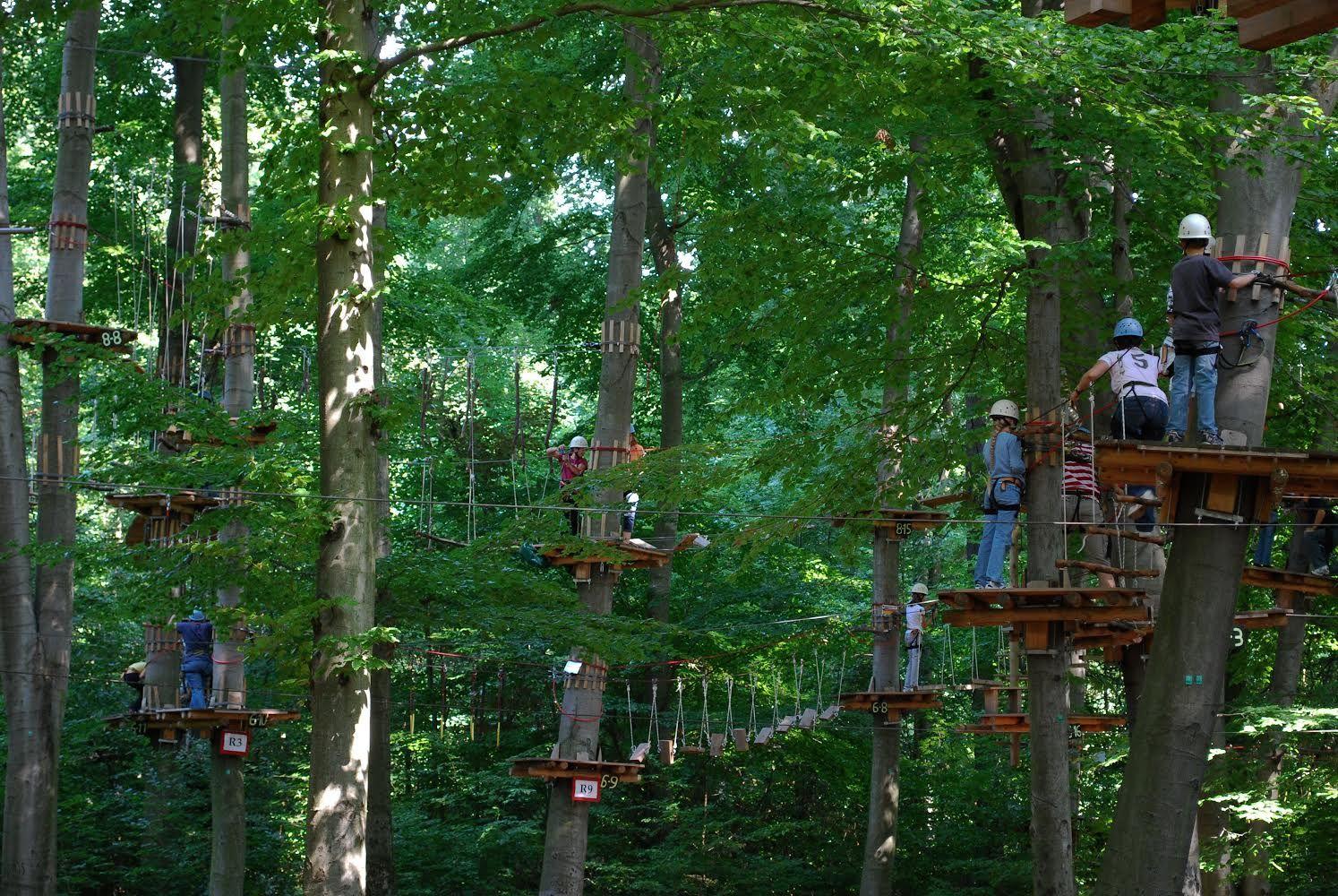 Forest Playground 1