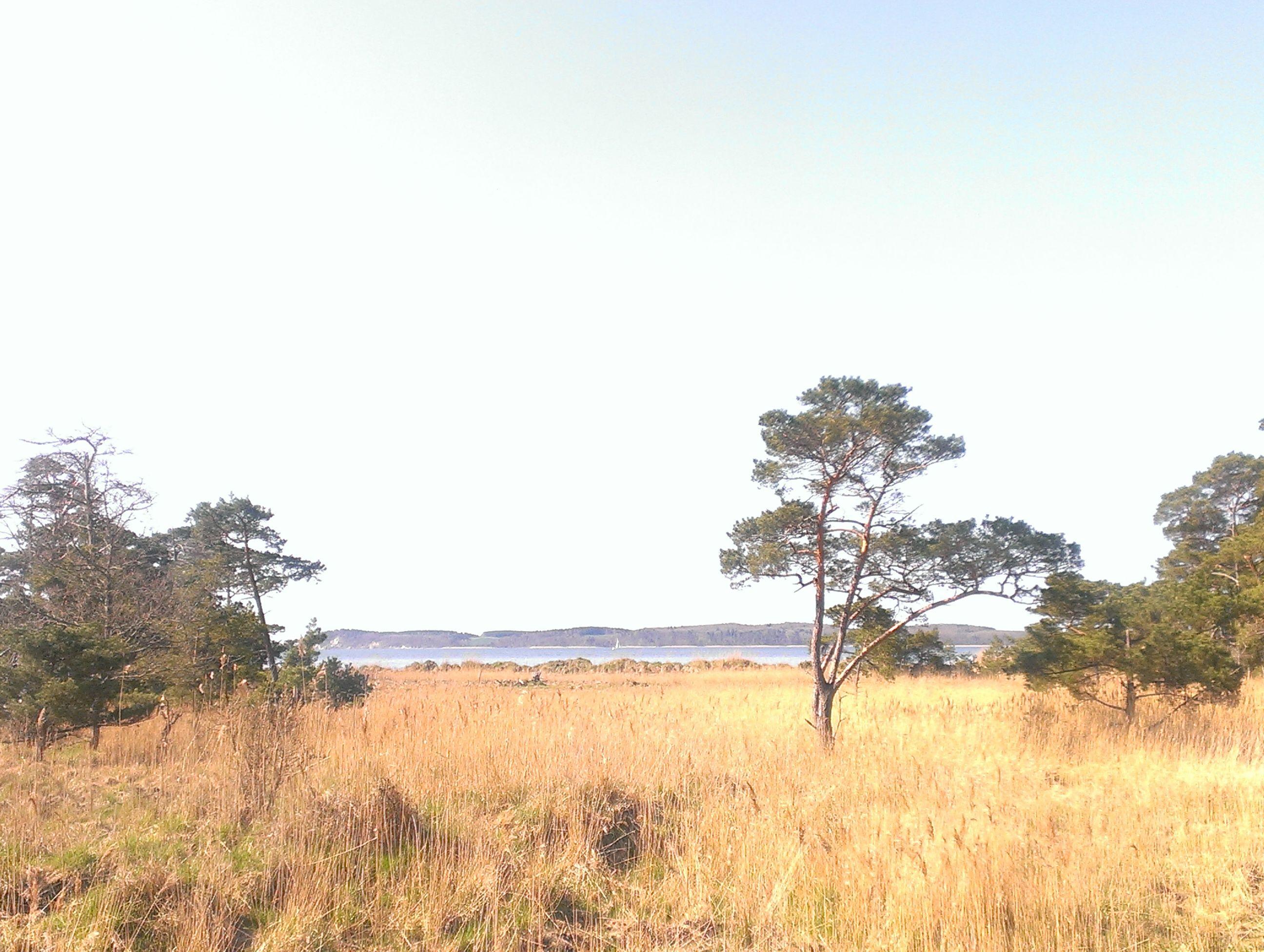 Boddenlandschaft bei Glowe Insel rügen, Hiddensee, Bilder