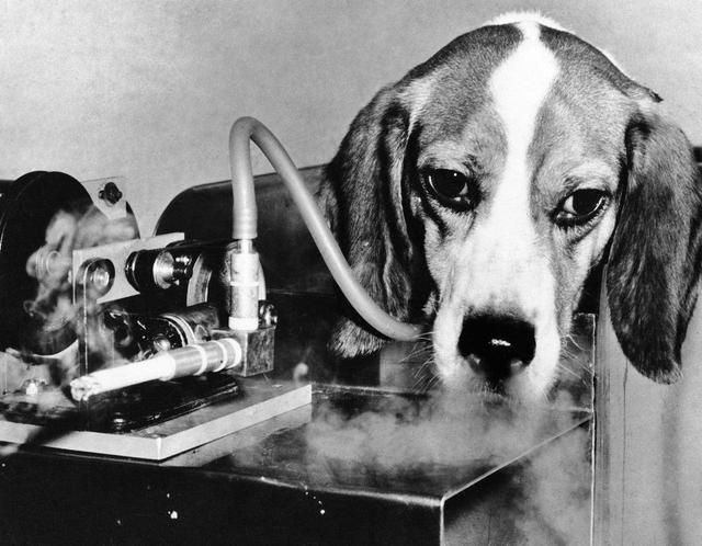 Pin By Rajinder Khatkar On Smoking Animal Experiments Beagle