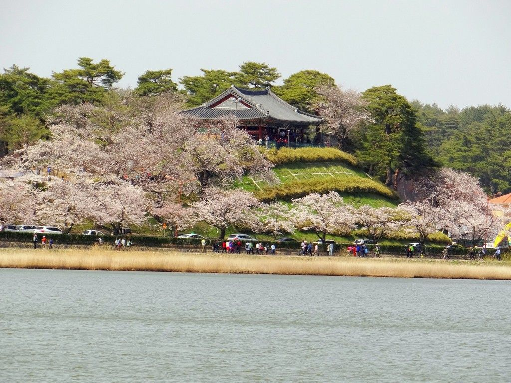 Top 5 Cherry Blossom Festivals In South Korea In 2017 In 2021 Cherry Blossom Festival Cherry Blossom Places To See