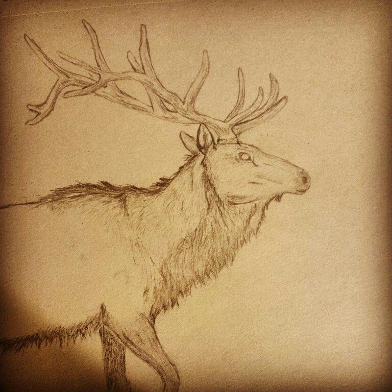 Elk pencil drawing | Drawings, Pencil drawings, Art