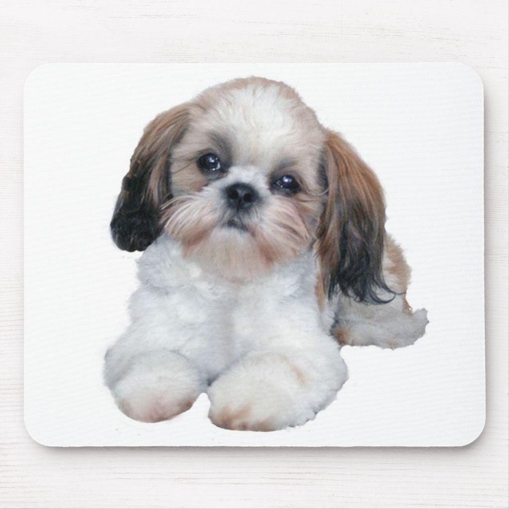 Shih Tzu Puppy Mousepad Shih tzu puppy