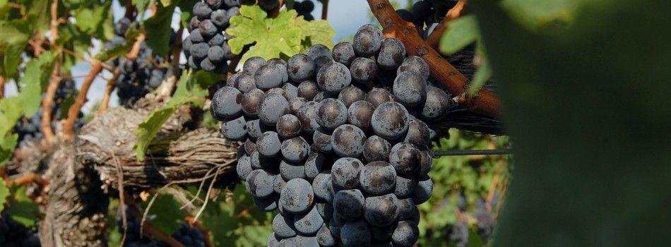 King family vineyards vineyard grapes wedding venues