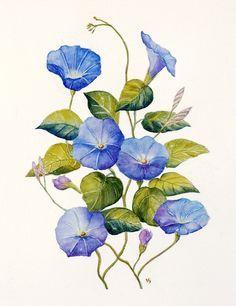 96df5861e11ed37312e0e4873fb8e184 Jpg 236 306 Morning Glory Tattoo Flower Painting Morning Glory Flowers