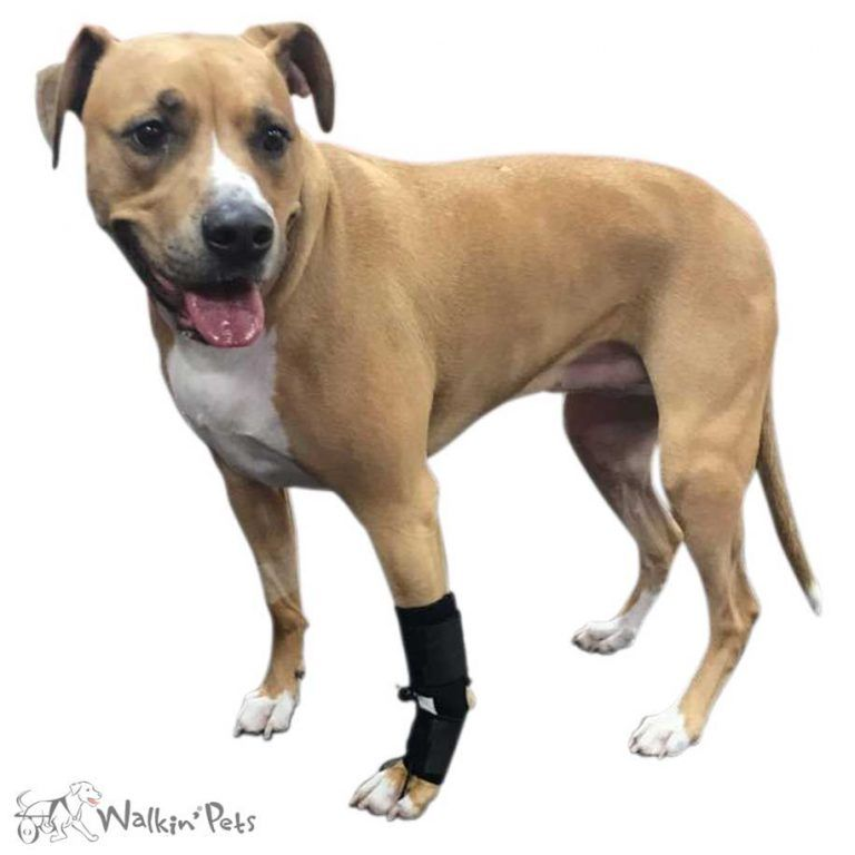 No Knuckling Training Sock Dog Knuckling Front Paws Dog