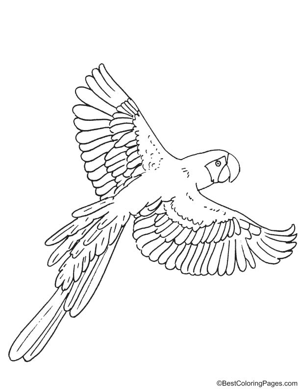 Macaw Coloring Page Coloring Pages Kid Coloring Page Free Coloring Pages