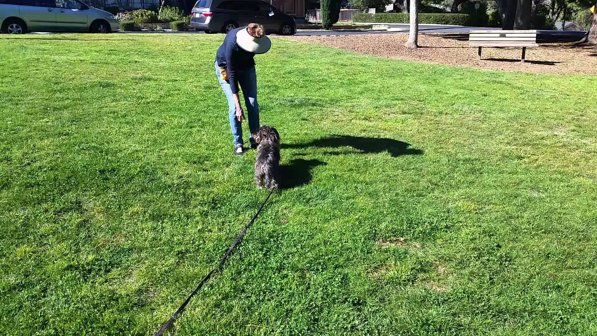 San Jose Dog Trainer The Recall Canine Tutors Dog Training Get