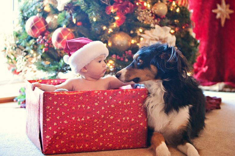 Baby And Dog In Front Of Christmas Tree In A Gift Box