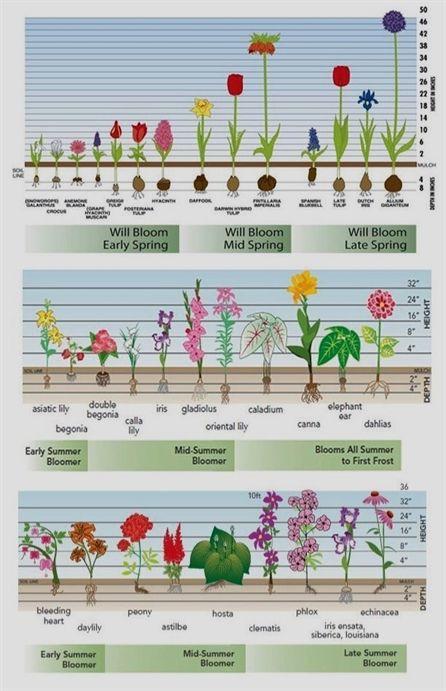 Garden Parasols For Sale Container Gardening Ideas Proven Winners Hydrangea Chart Gardening Elephant Drawing Easy For Ki Plants Garden Bulbs Garden Planning