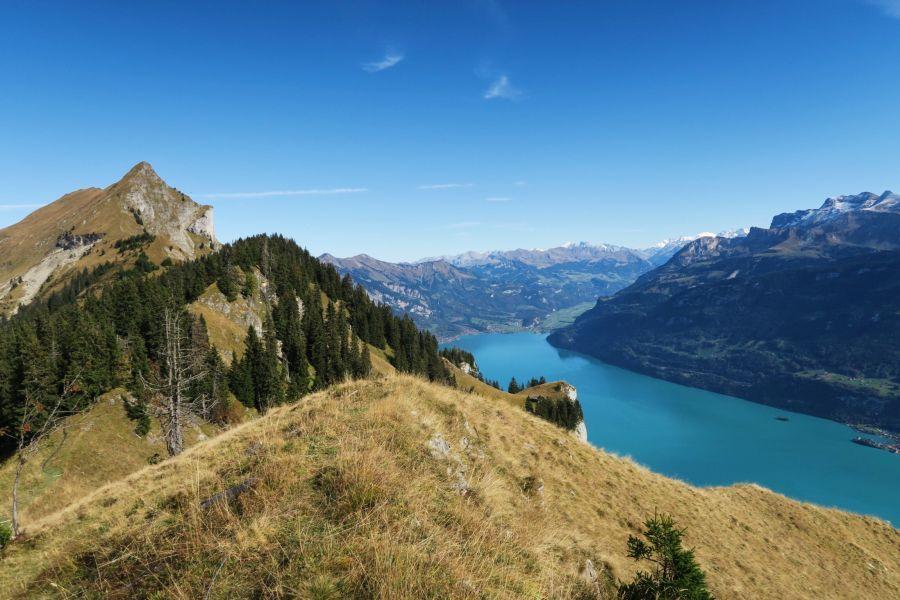 Nissybunique // Switzerland's Nature. Hardergrad