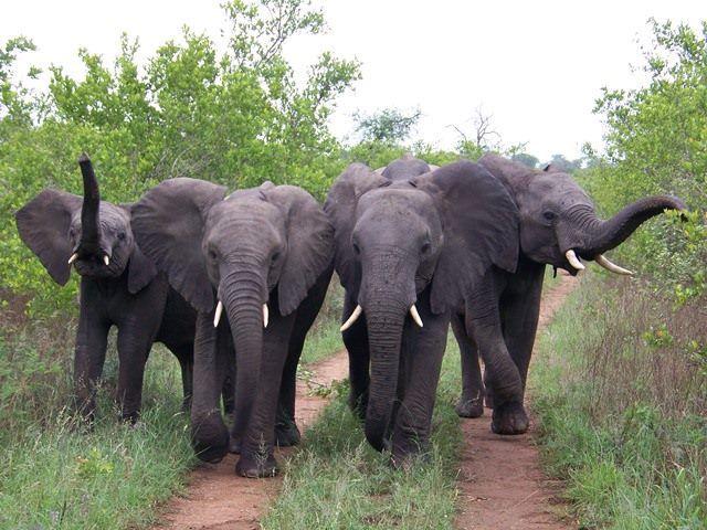 Road block at Lukimbi, Kruger National Park, http://www.pridelodges.com/index.php/game-lodges/classic/lukimbi/