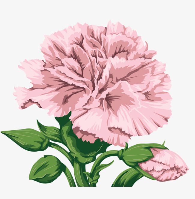 Carnations Free Watercolor Flowers Flower Png Images Flower Art