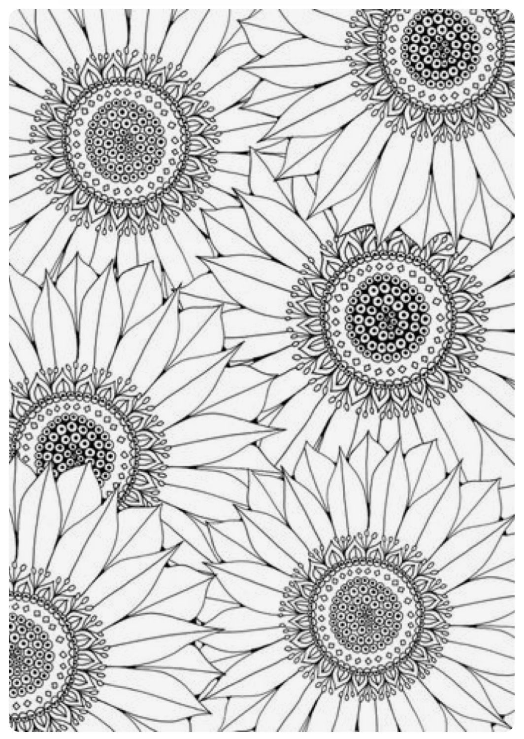 Sunflower Coloring Page Sunflower Coloring Pages Adult Coloring