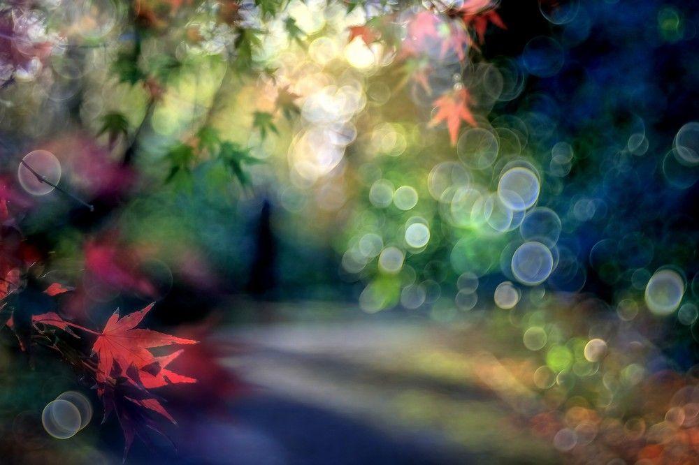 Der Mann im Blätterwald von magic-colors