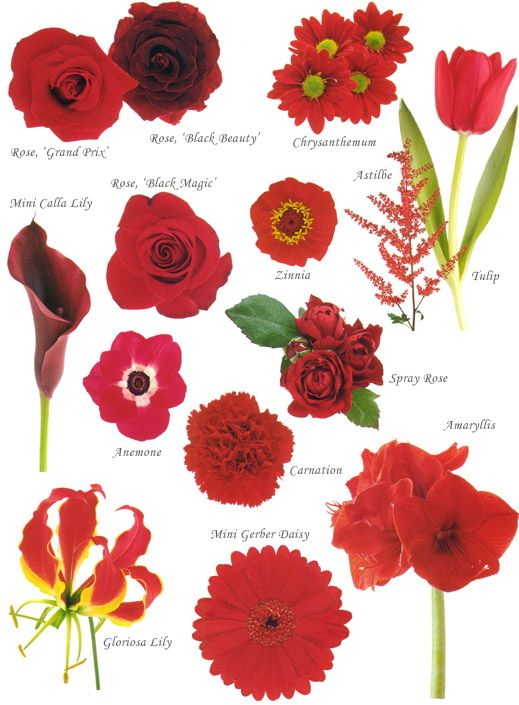 flower names by color red wedding flowers flowers