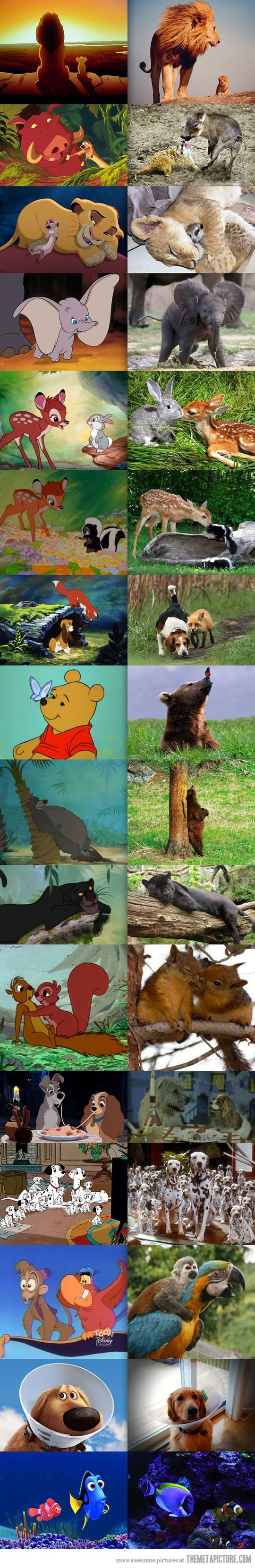 Disney animals in real life!