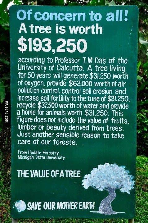 What is a tree worth? #Organic #Green www.CidBotanicals.com