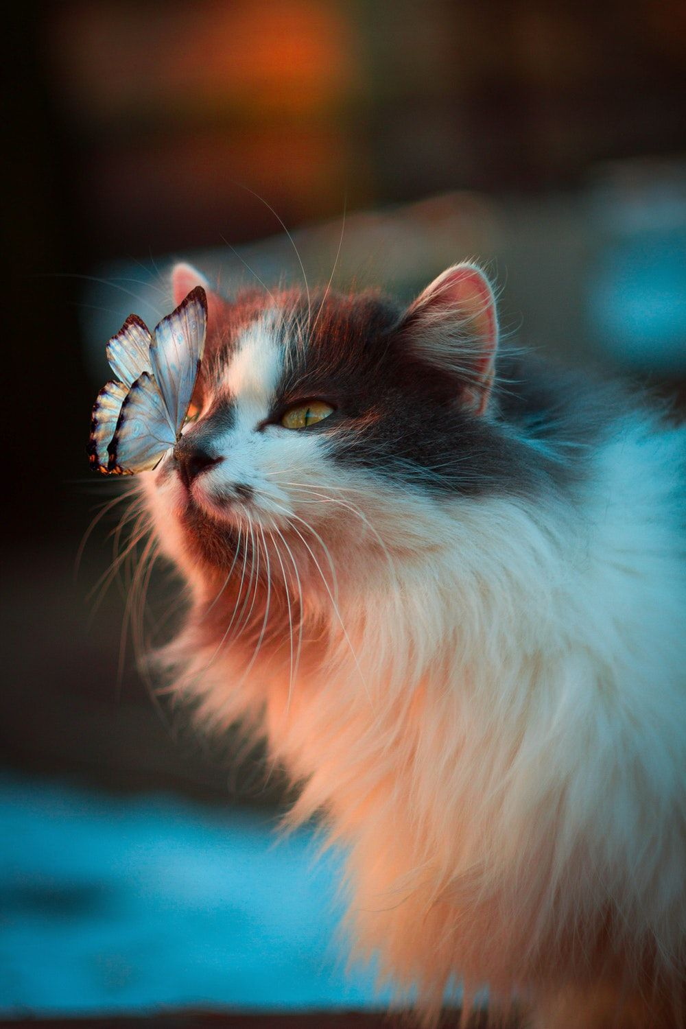 White Butterfly Resting On Cat S Nose The Totem Animal Of The Cat