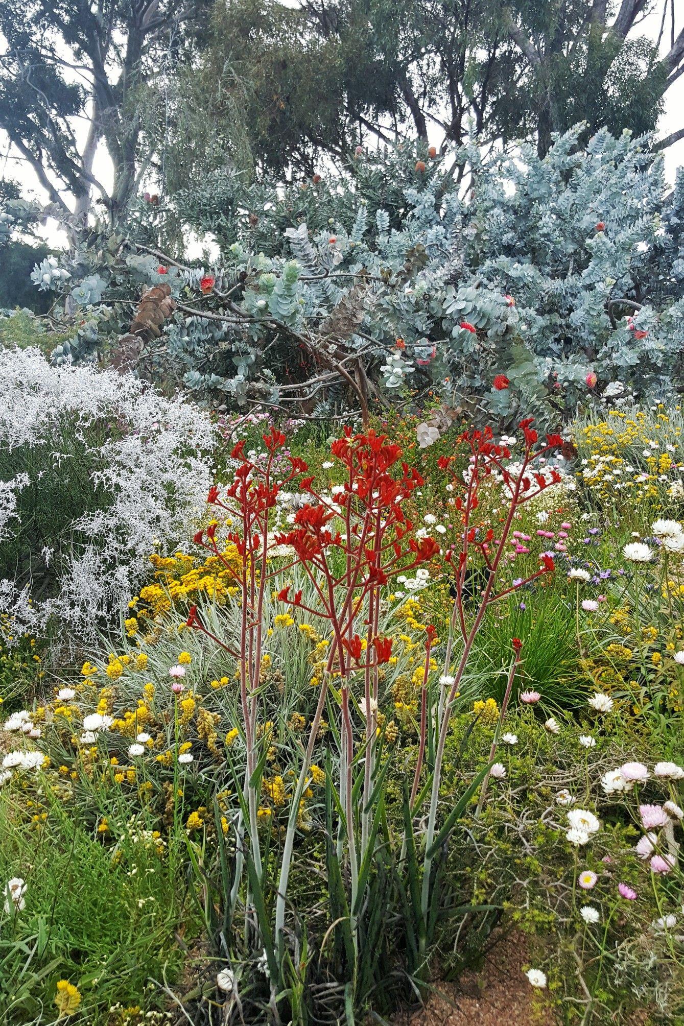 Kings Park Perth WA October   garden ideas   Pinterest   Perth ...