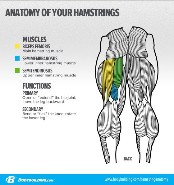 3 Essential Moves For Powerhouse Hamstrings | Glutes-Hams-Quads ...