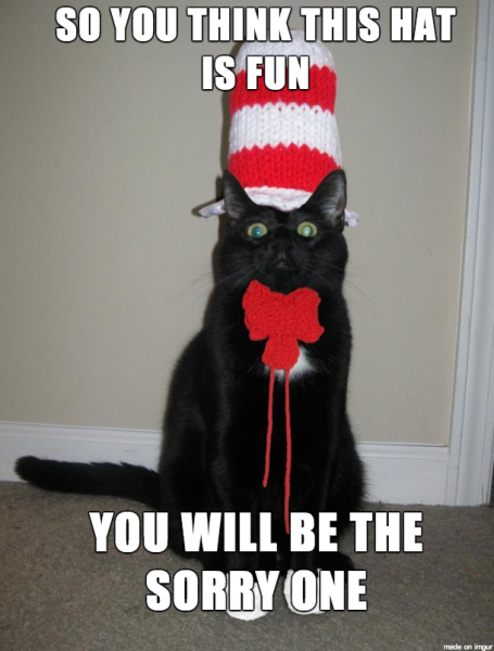 cat 10 funny halloween - Funny Cat Halloween