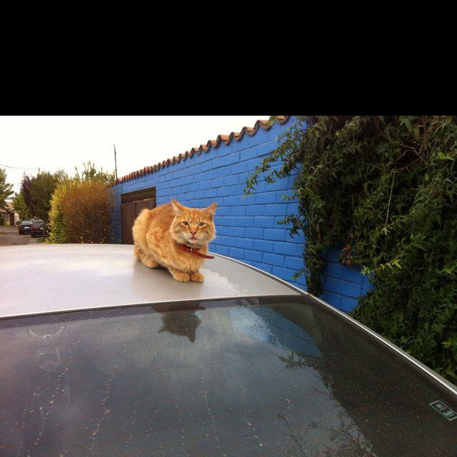 Guardián de mi auto