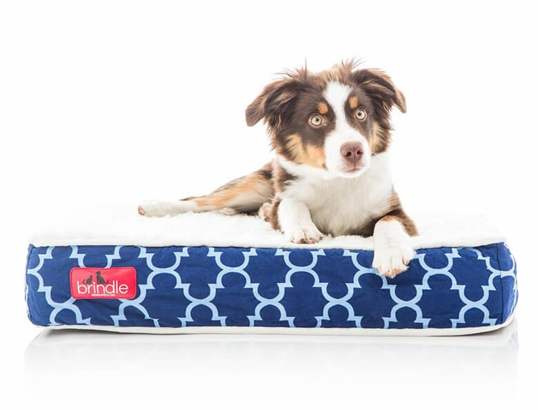 Sleep Tight 6 Of The Best Orthopedic Dog Beds On The Market Best Orthopedic Dog Bed Orthopedic Dog Bed Orthopedic Dog