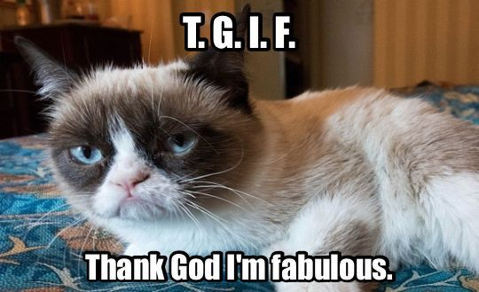 Not Funny Cat Meme : Too bad you re not funny animals grumpy cat cat