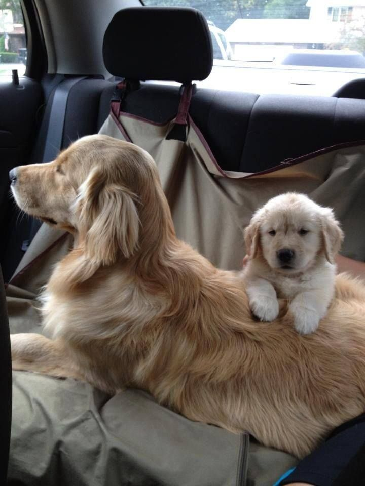 Olha isso!! Cute animals Pinterest Dog, Animal and Doggies