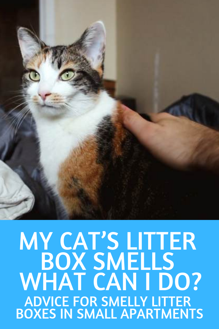 Litter Box Smell What Can I Do House Smells Small