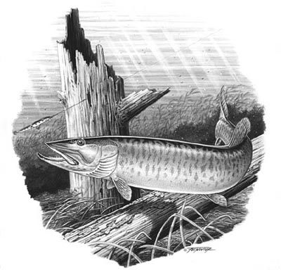 Musky Coloring Page Google Search Grayscale Coloring Coloring
