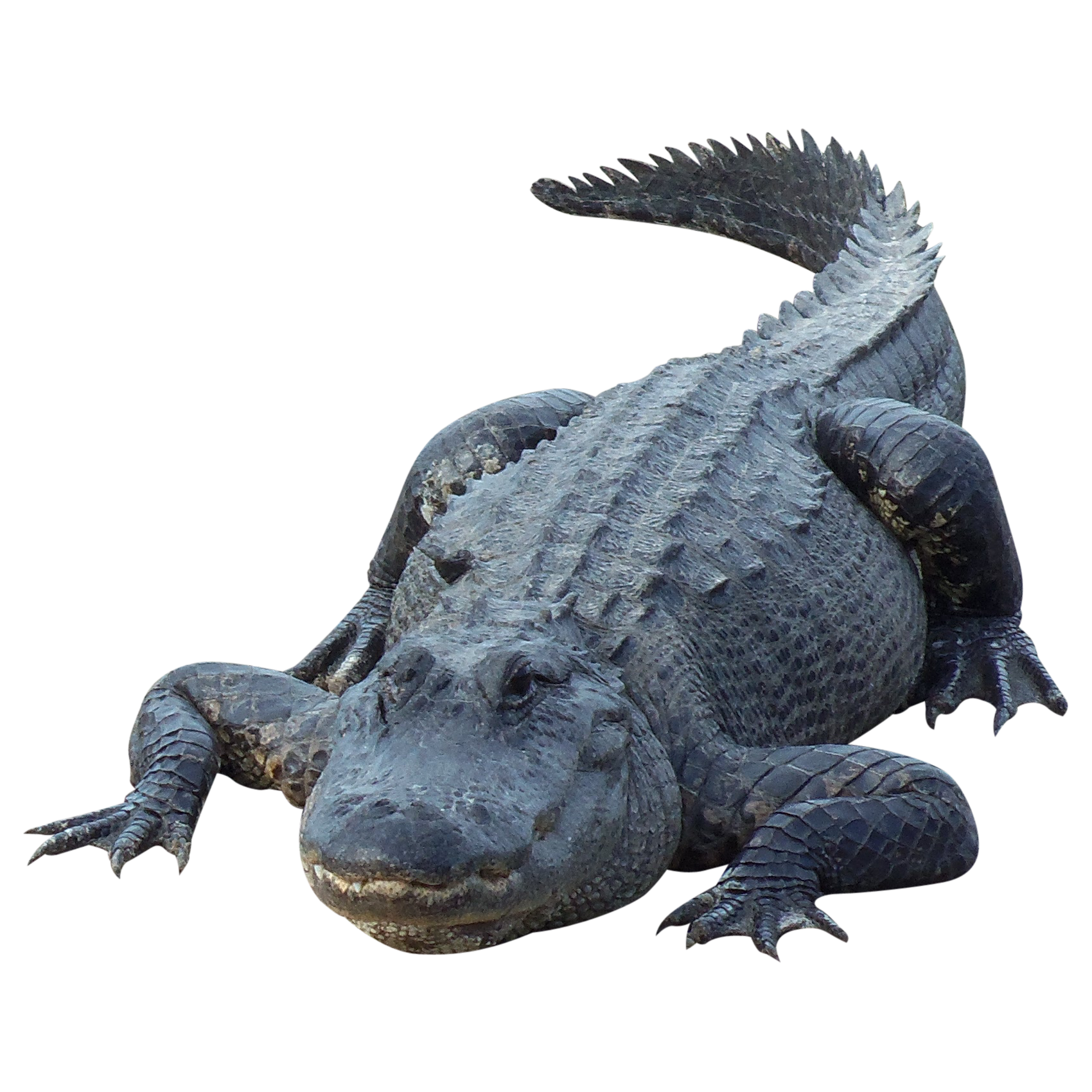 Gator 03 1 700 1 700 Pixelimmediateentourage