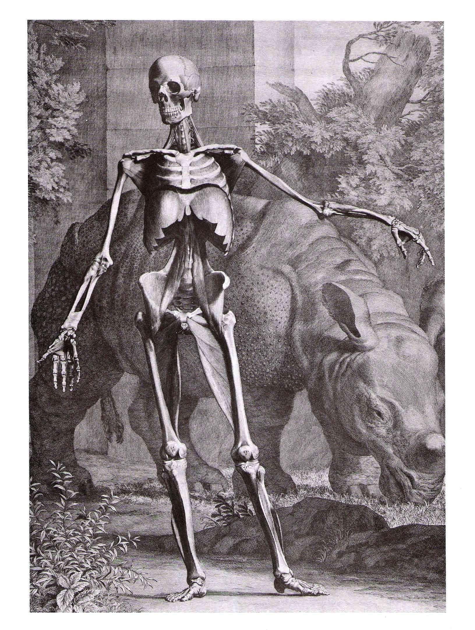 Bernard Siegfried Albinus | cosas | Pinterest | Anatomía y Cosas