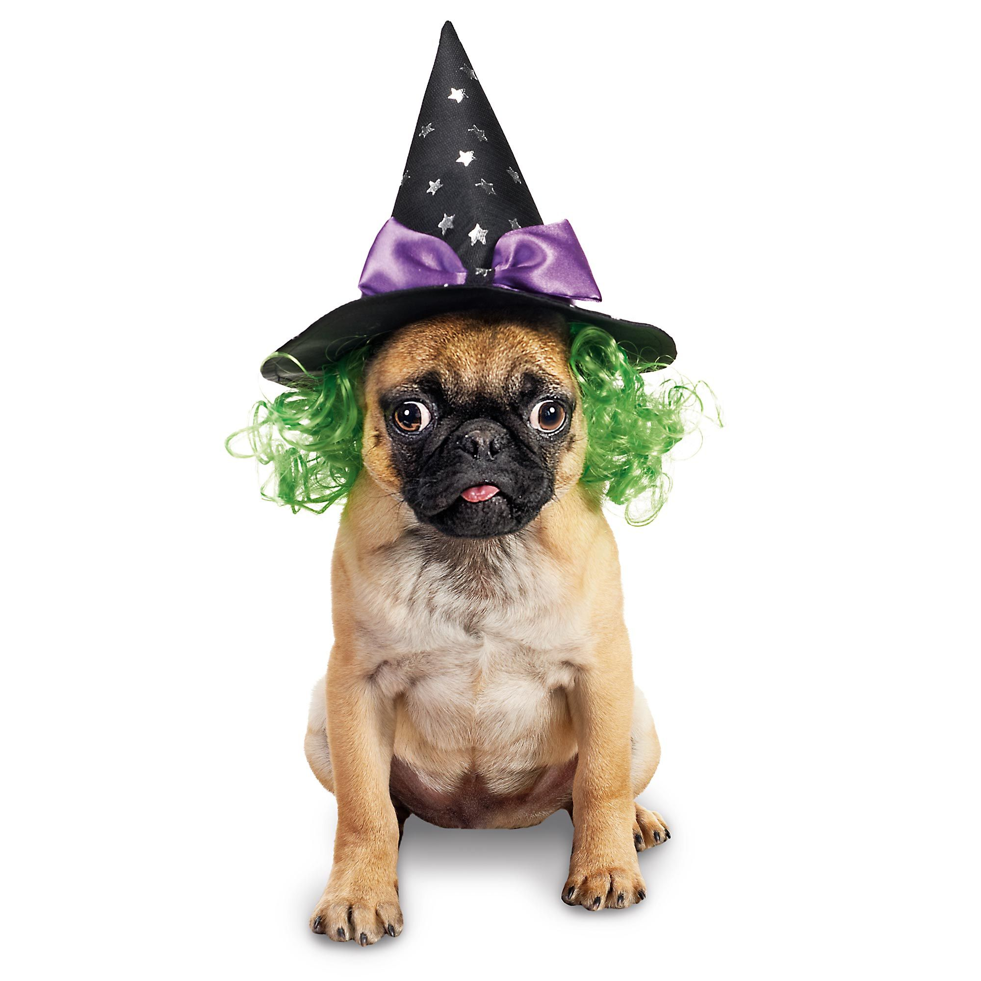 This just cracks me up. Bewitching dog costume. #petcohowloween ...
