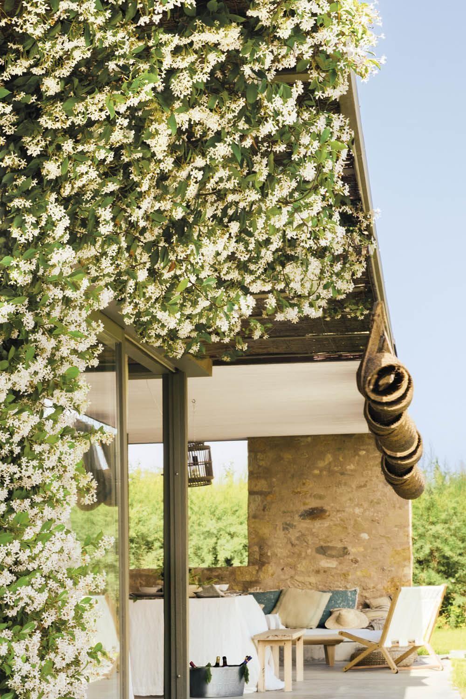 25 plantas de exterior ideales para tu patio o jardín, como el jazmín  chino, también conocido como falso jazmín …   Plantas de exterior, Plantas,  Plantas trepadoras