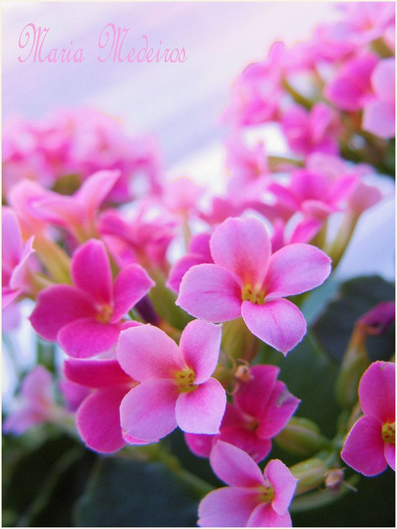 Pink Flowers Little By Cozycomfycouch On Deviantart