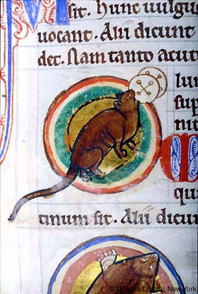 Bestiary, MS M.81 fol. 47r - Images from Medieval and Renaissance Manuscripts - The Morgan Library & Museum
