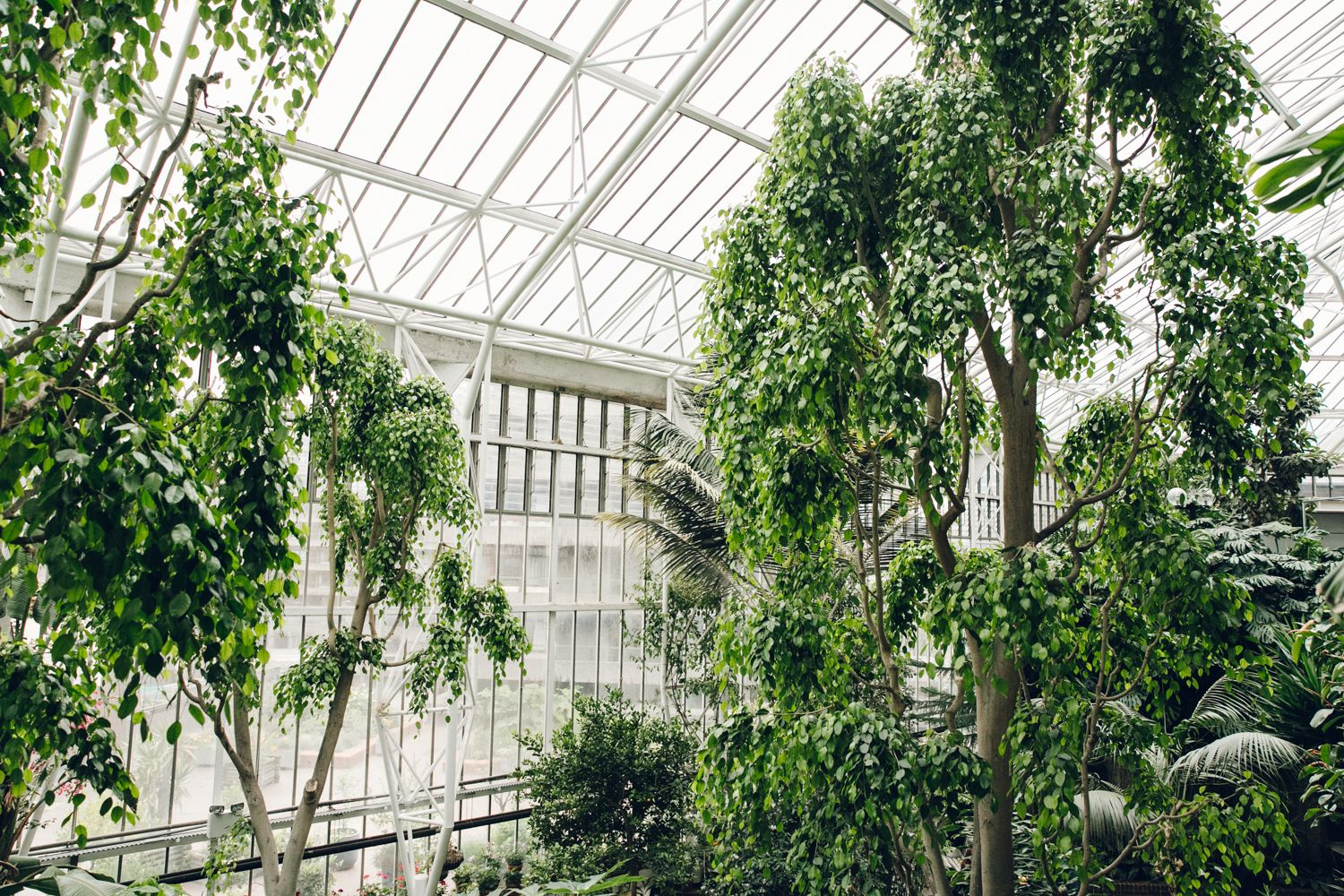 barbican conservatory london tropical plants kew gardens and