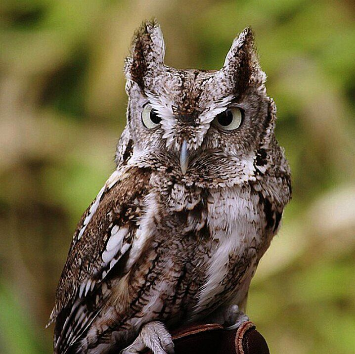 (3) Twitter Owl