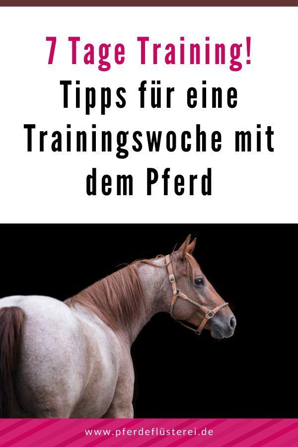 7 Tage Training! Was du mit deinem Pferd in einer Woche alles machen kannst