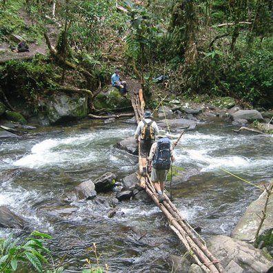 Track – Papua New Guinea
