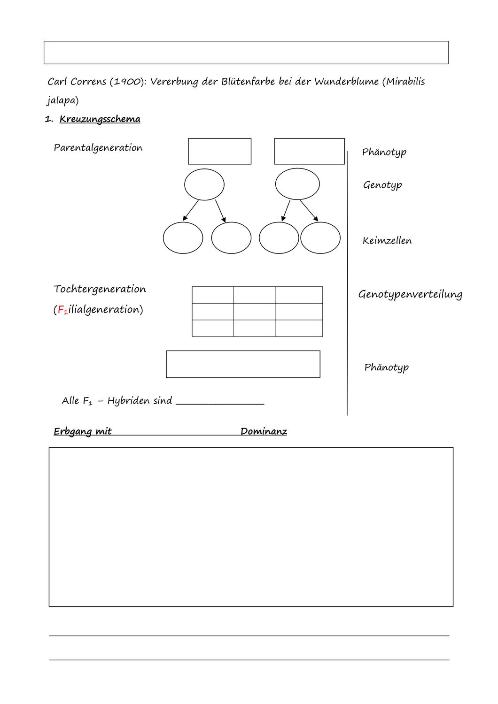 Biologie Genetik Aufgaben Mit LSungen   ekiki dafa