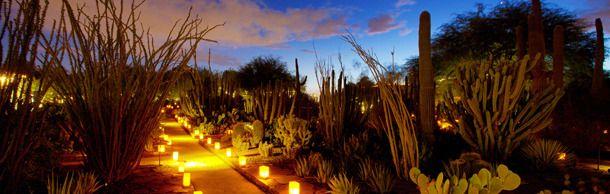 Las Noches De Las Luminarias   Ottosen Entry Garden   Desert Botanical  Garden   Phoenix,