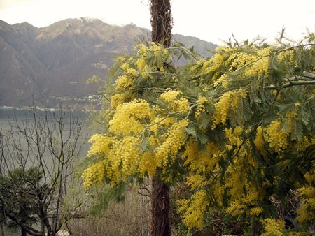 Mimosa, a flower. There are also human beings who deserve this name.