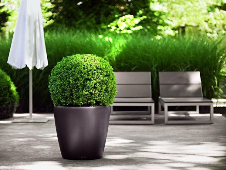 Risultati immagini per piante terrazzo | Vase | Pinterest | Terrazzo ...