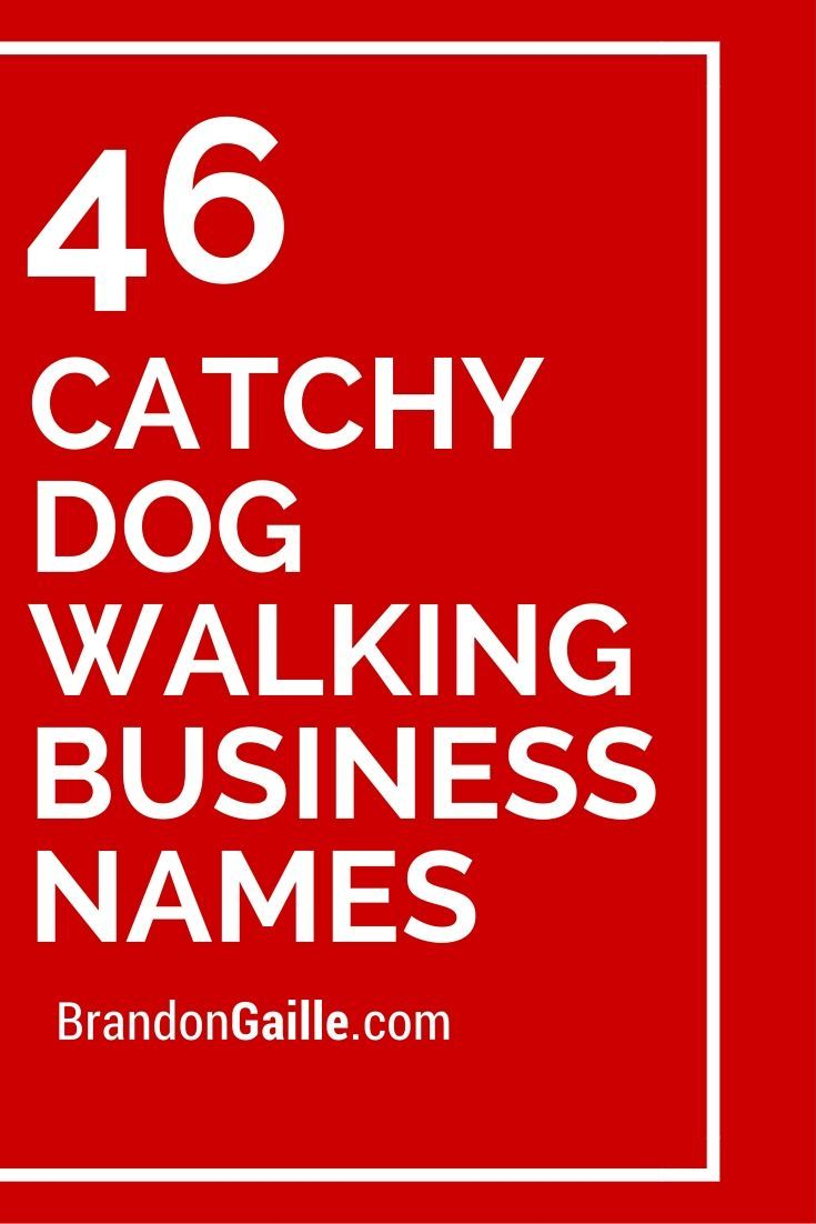 250 catchy dog walking business names