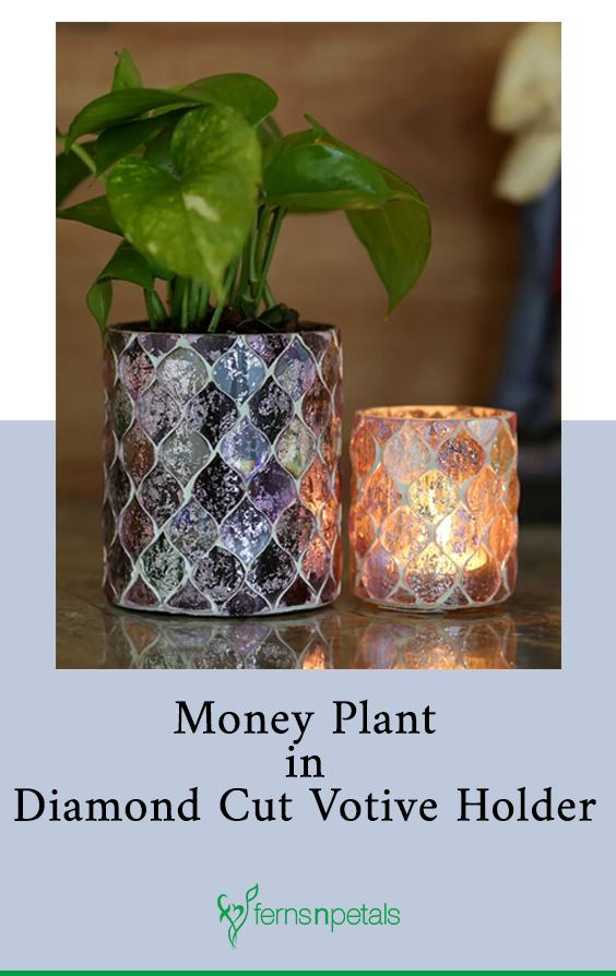 #FernsNPetals #HomeDecor #HomeDecorItems #HomeDecorIdeas #HomeDecorations #DecorDIY #HomeTourIdeas #Plants #IndoorPlants #PlantsForBedRoom #BedRoomDecor #Decor
