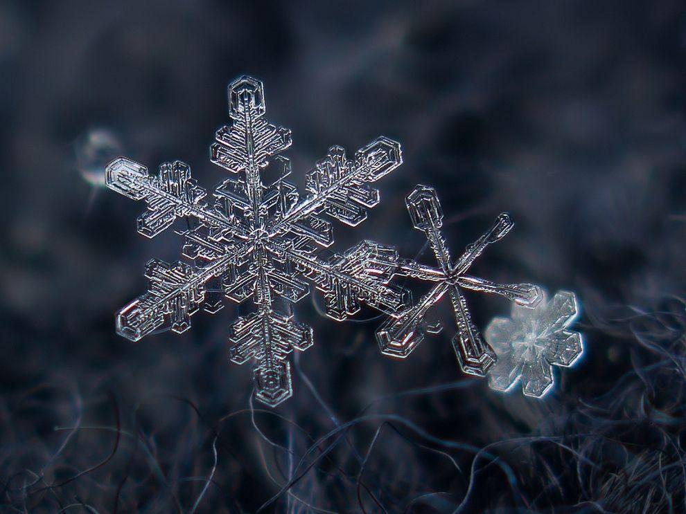 11 Photos Macro de Flocons de Neige à Couper le Souffle